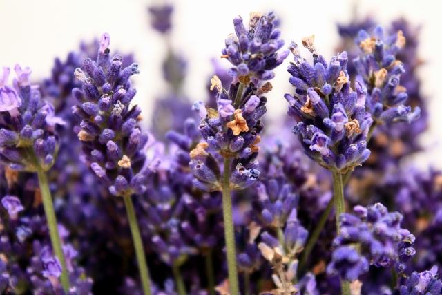 lavender essential oil diffuser