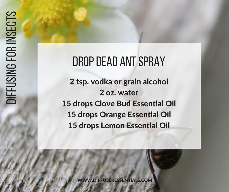 DIY Essential Oil Ant Spray Recipe